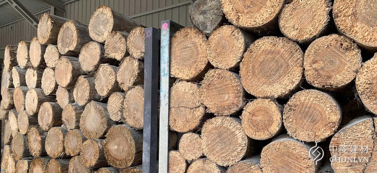 鑽泥板使用台灣杉作為刨絲木料,在製絲前會先將木材切段。